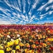 flower field - Wallpaper HD 3d hd background images.