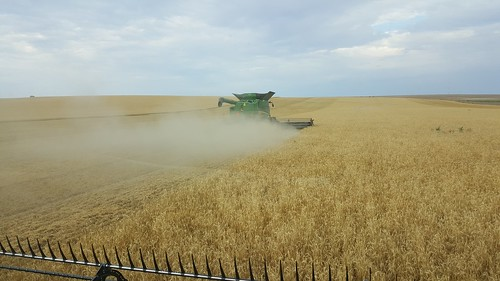 Schemper 2017 - Western Nebraska Wheat Harvest