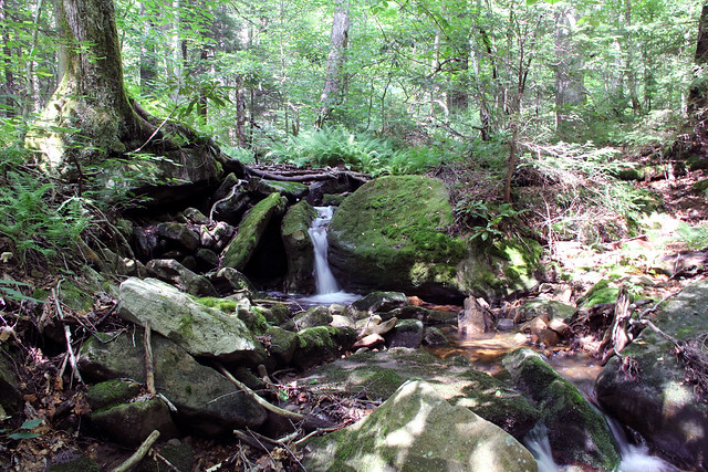 20170715_Cranberry_Wilderness_019