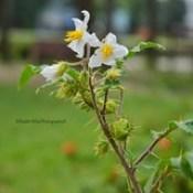 Amazing Flower Photo | Nikon D5200 | Photography | Bangladeshi Flowers | Best Photo.