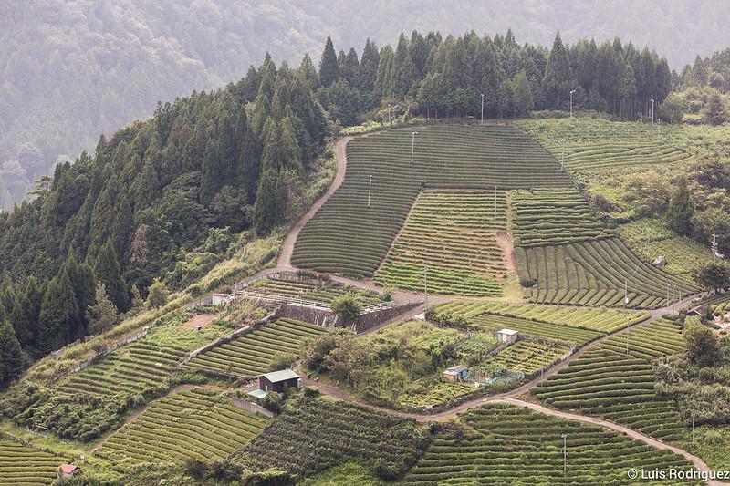 Machu-Picchu-Gifu-26