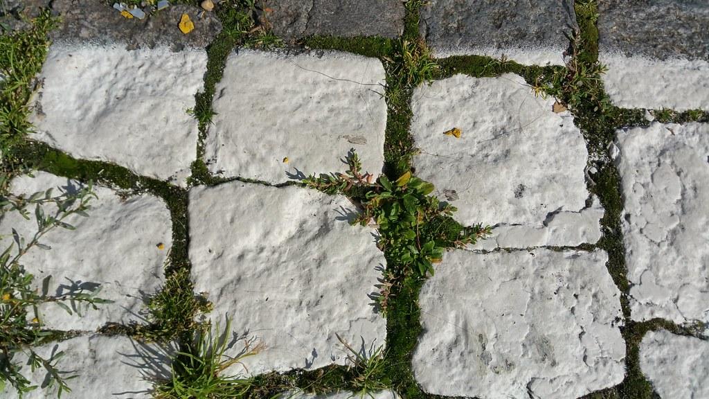 Sous les pavés de la place du Panthéon, l'herbe.