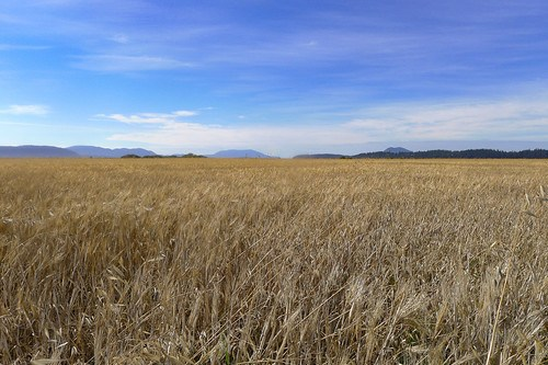 Skagit Fields-4