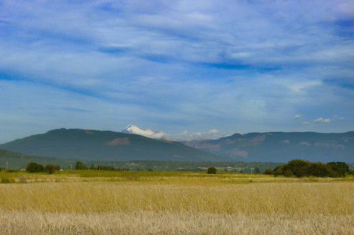 Skagit Fields-5