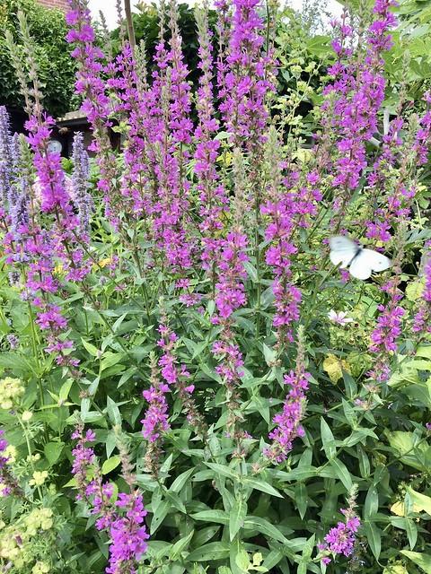 Bloemen landelijk tuin