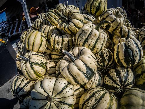 Schuh Farms and Pumpkins-023