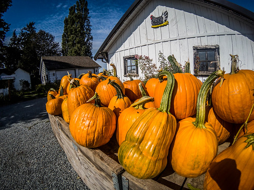 Schuh Farms and Pumpkins-010