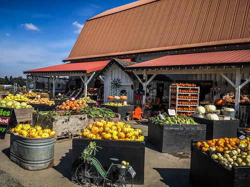 Schuh Farms and Pumpkins-002