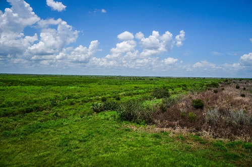 Fellsmere Stick Marsh-28