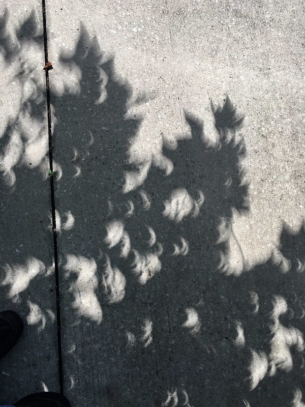 Eclipse 2017 - thanks to the trees for my only photo op