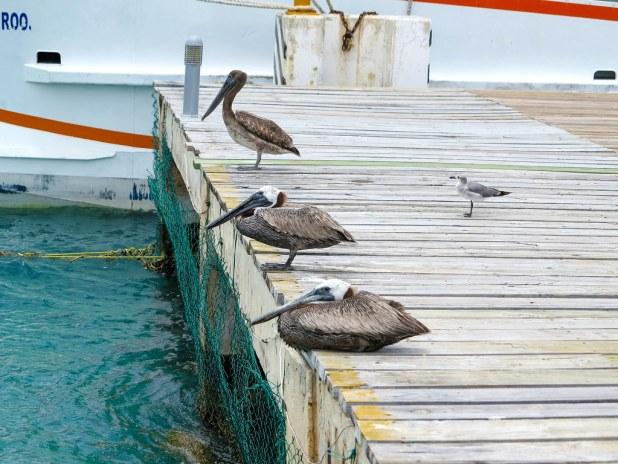 Puerto de Isla Mujeres