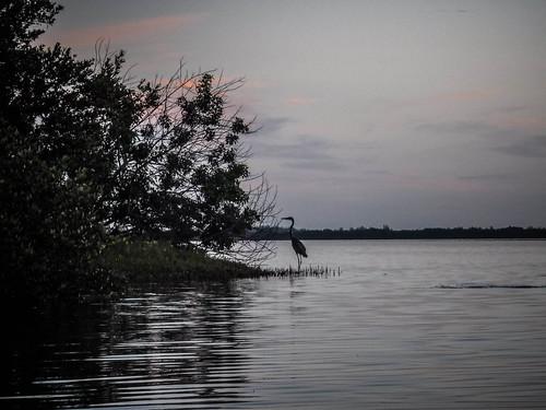 Indian River Paddling-17