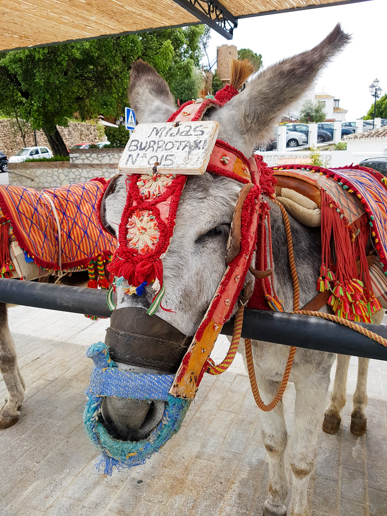 A donkey used for taxi services for tourists