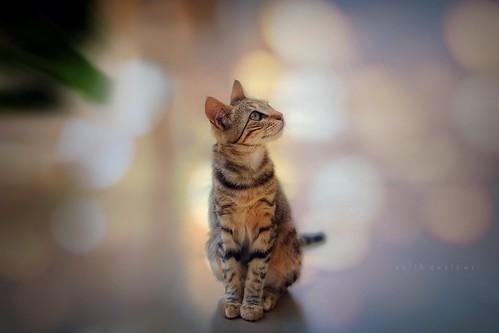 Cat stories - curiosity..