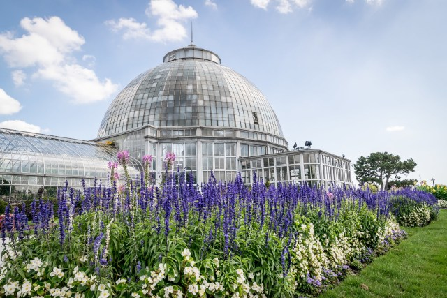 inside the conservatory is a beautiful collection of tropical plants and succulents