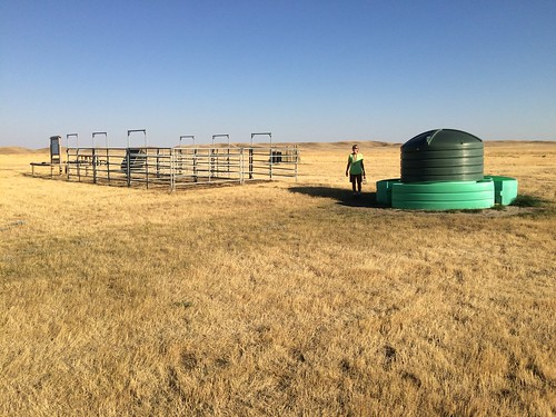 Grasslands West block horse stalls