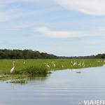 Viajefilos en la Amazonia, Peru 019