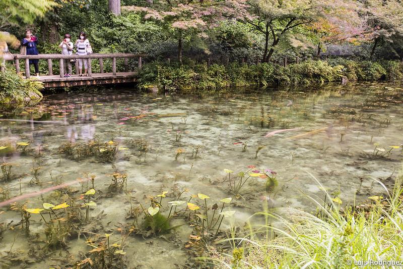 Estanque-Monet-Gifu-11