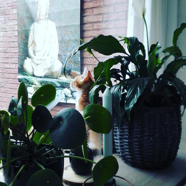 Vensterbank planten met poes