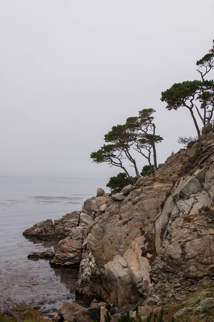 08.05. Pint Lobos State Marine Reserve