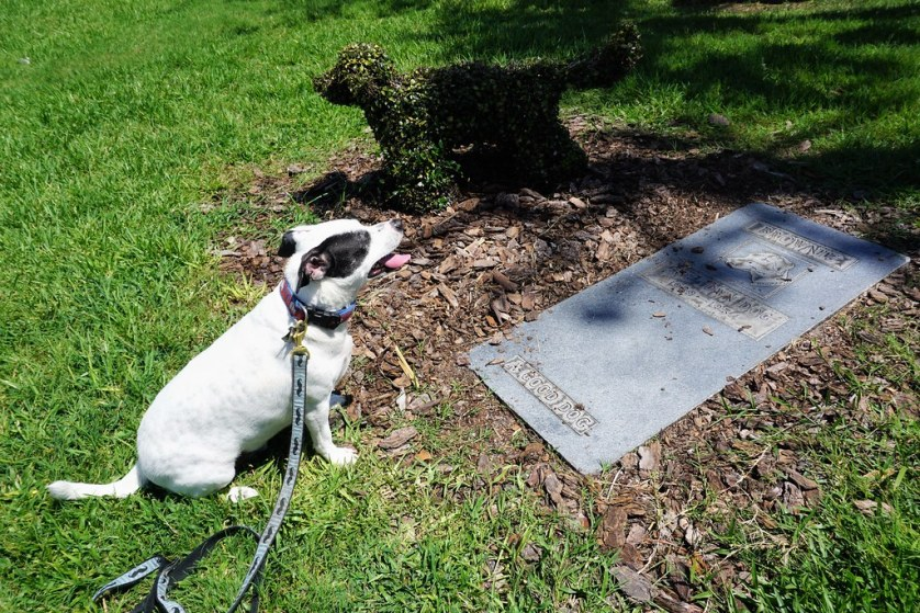 My Dog, Radcliff, at Brownie the Town Dog's Grave in Daytona Beach, Fla., July 15, 2017
