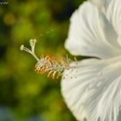 #flower #amazing #nice #nikon #click #photohraphy #photo #photowork #Photographer #hobby #Bangladesh  #joba.
