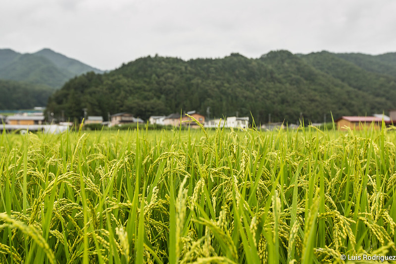 Paseo-bici-Hida-Furukawa-Gifu-16