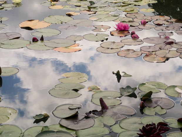 oxford_botanic_garden_15