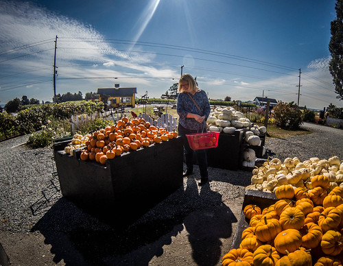 Schuh Farms and Pumpkins-019