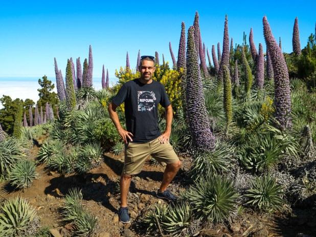 Tajinastes en La Palma