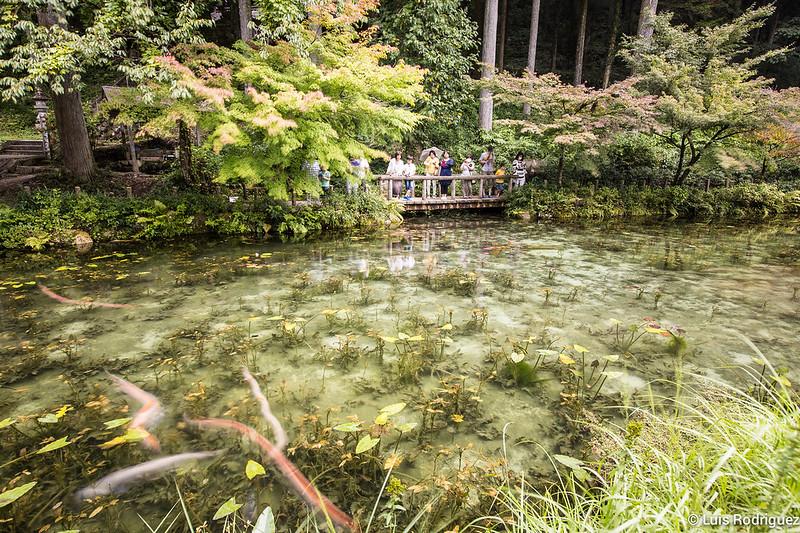 Estanque-Monet-Gifu-9