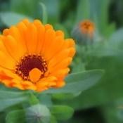 Quinta-feira - flor amarela. ◔◔ ღ.