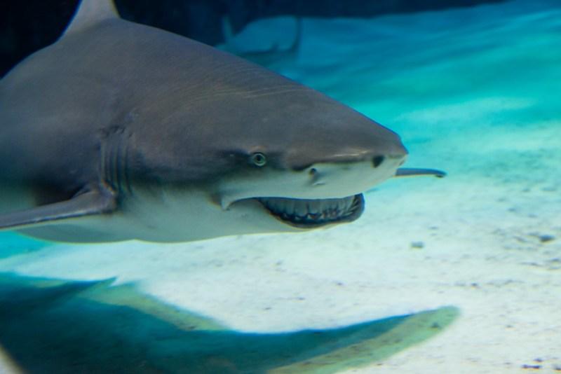 美麗海水族館 / Sharks