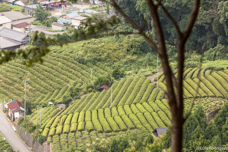 Machu-Picchu-Gifu-25