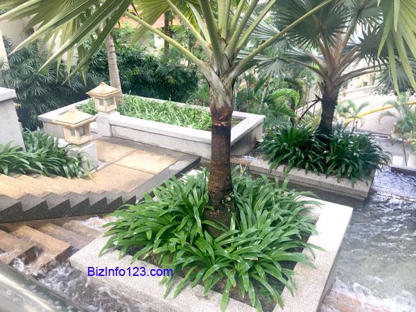 waterfall-palm