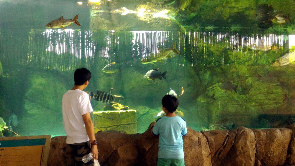 River Safari 4_zpst7qrfhbj