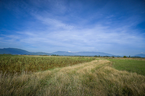 Skagit Fields-7
