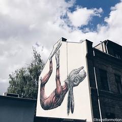 #goodmorning #roa #streetart #art #visitkoeln #urbanCGN #cologne #thisiscologne #koelnergram #köln #ig_cologne #ig_germany #germany #vsco #vscocam #guardiantravelsnaps #guardiancities #wanderlust #travel #koelnergram #instaköln #travelsde