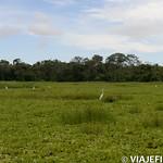Viajefilos en la Amazonia, Peru 164