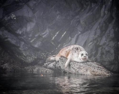 Seal-2