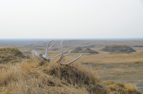 Grasslands East block hoodoo skull