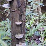 Viajefilos en la Amazonia, Peru 057