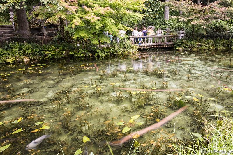 Estanque-Monet-Gifu-10