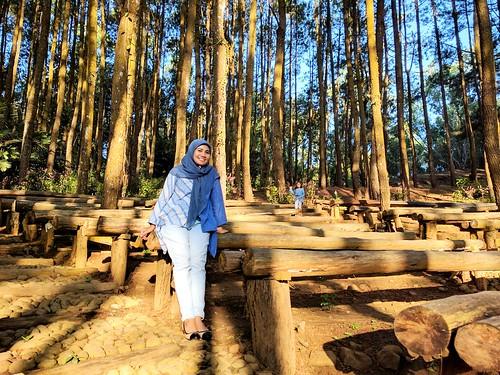 pinus Mangunan Yogyakarta