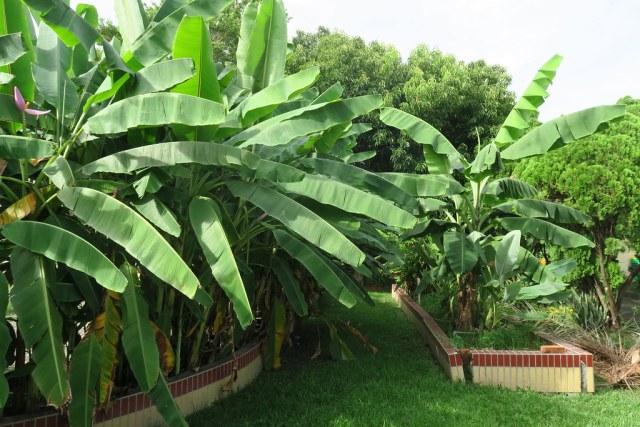 台灣香蕉科技園區 (17)
