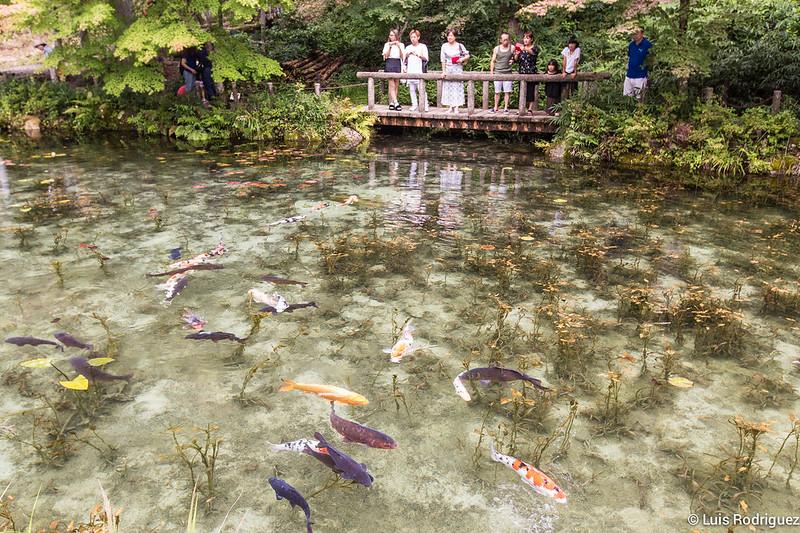 Estanque-Monet-Gifu-28