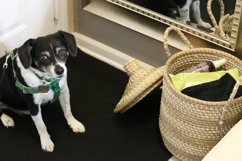 louis-the-beagle-dog-basket-wipes-cloth-spray
