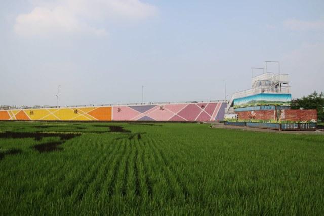2017台南好米季 (1)