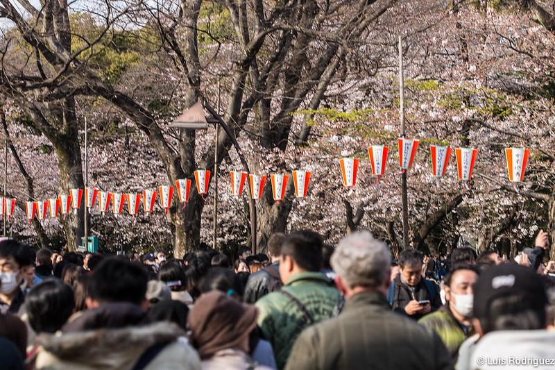 Ueno-Park-26