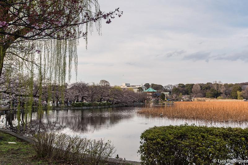 Ueno-Park-90